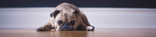 pets | divorce | family law | matrimonial law